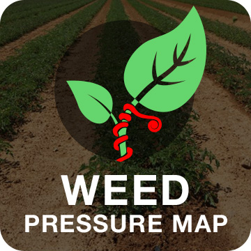 Weed Pressure